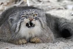 """ანტირეკლამის შედევრი: """"ვაჩუქებ კატას!"""""""