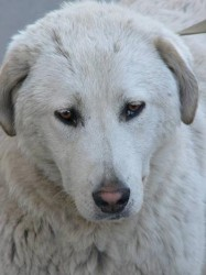 ამ ძაღლის საქციელმა მილიონობით ადამიანს გული აუჩუყა