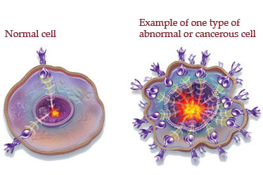The_Difference_Between_Normal_And_Cancer_Cells