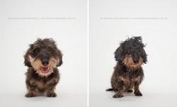 მშრალი ძაღლი – სველი ძაღლი