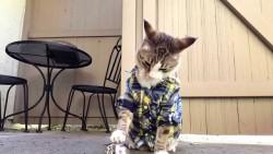 პავლოვის კატა: ასეთ ნიჭიერი ფისო ჯერ არ გვინახავს