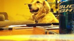 ძაღლი, რომელსაც უყვარს გიტარა