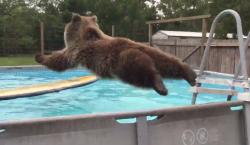 ბედნიერი დათვი