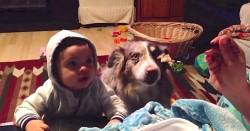 სასწაული – ძაღლი ამბობს mama! ალბათ, ერთ დღეს ძაღლები ალაპარაკდებიან. ეს ცუგო – პირველია